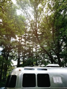 Side view of Airstream in front of tall trees